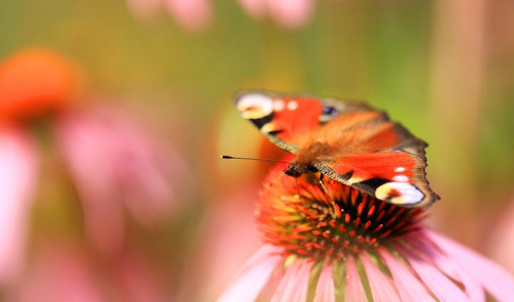 A butterfly rests on a flower in Slovenia
