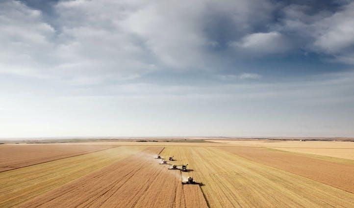 The rolling fields of Gimli, Manitoba