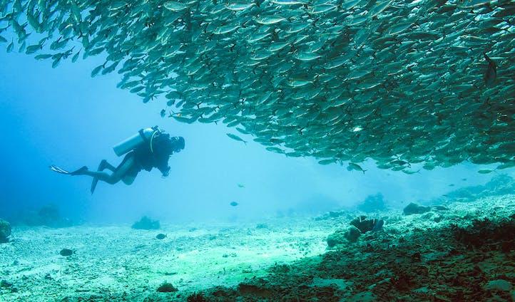 Deep Diving in Raja Ampat