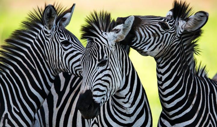 Photography Safari