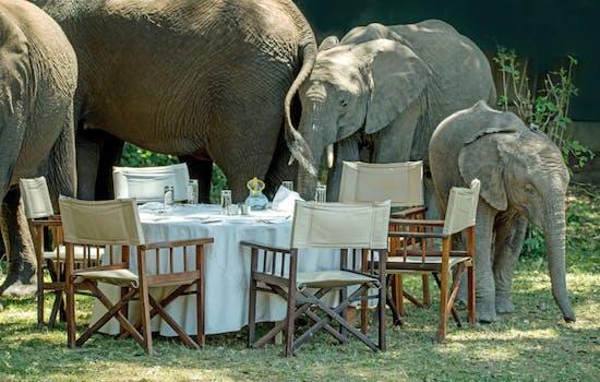 Safari experience in Kenya