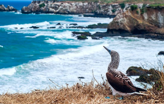 Luxury Holidays in Ecuador & Galapagos