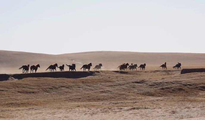 Luxury Honeymoons in Mongolia