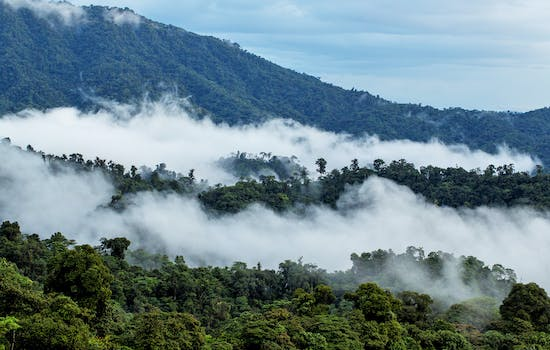 Luxury Hotels in Choco Cloud Forest