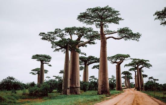 Luxury Holidays in Madagascar