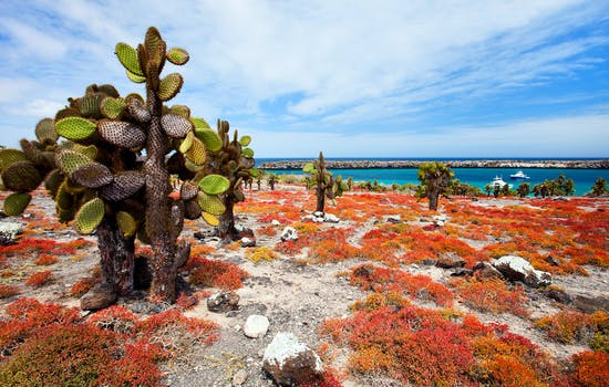 Luxury Hotels in the Galapagos
