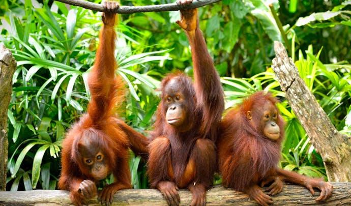Discover Borneo