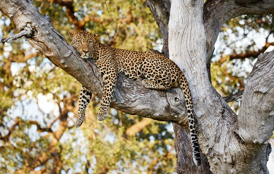 More about Zambia