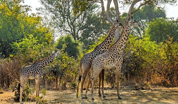 Luxury safari tours in Zambia