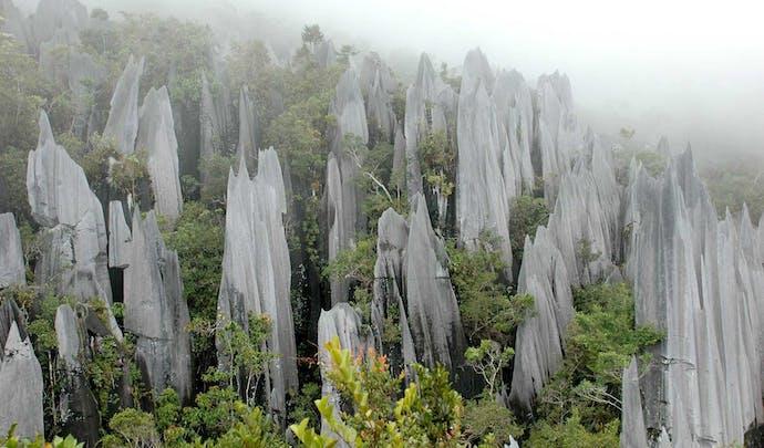 Private jungle tours in Borneo