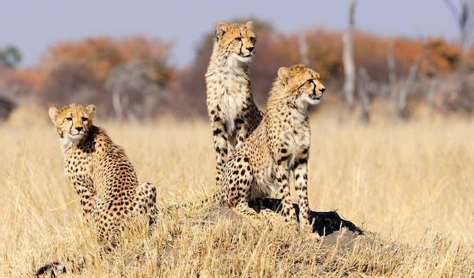 Private safari tours in Zimbabwe