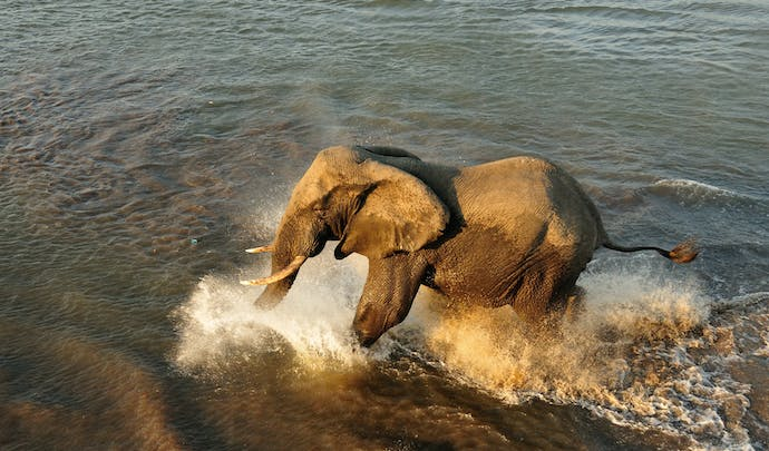 Private animal tours in Malawi