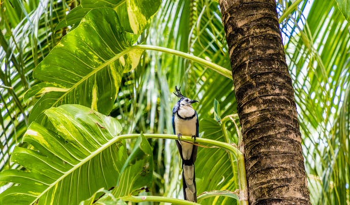 Private tours in Nicaragua