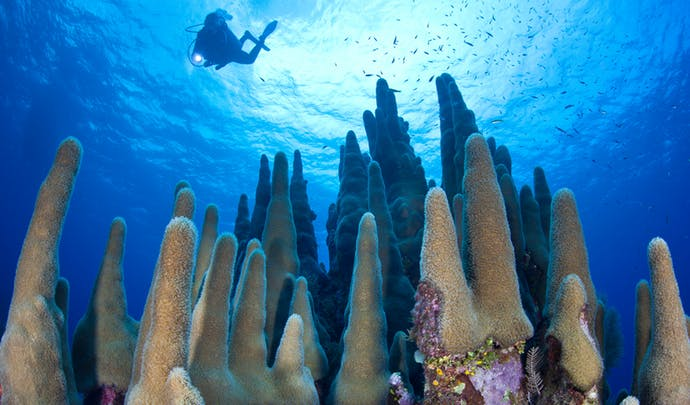Private Tours in the Cayman Islands