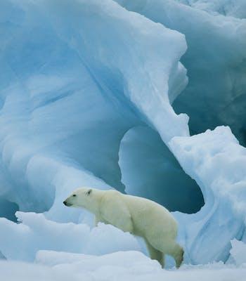 Adventure honeymoons in Greenland