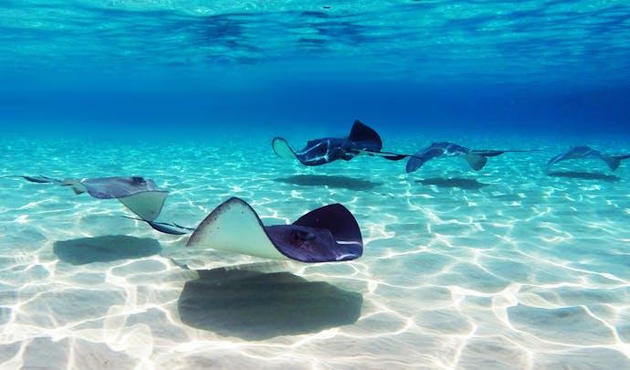 Honeymoons in the Cayman Islands