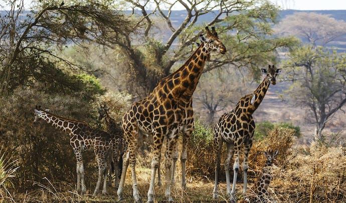 Private tours in Uganda