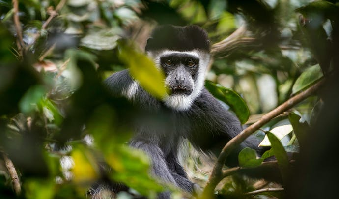 Stay in Congo's Ndzehi forest