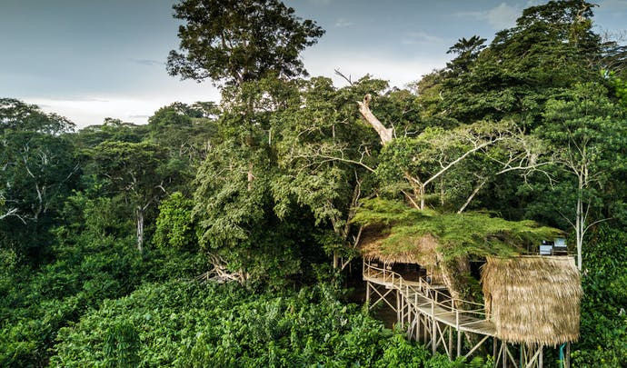 Stay in the tree canopies in Congo