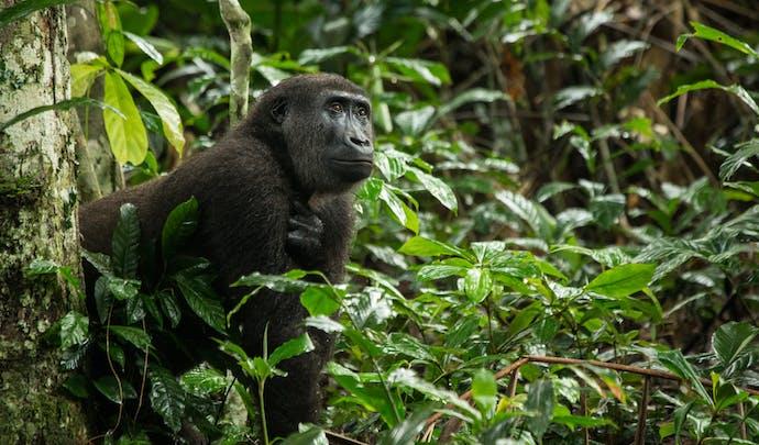 Private tours in Congo