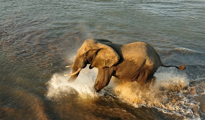 Private elephant tours in Malawi