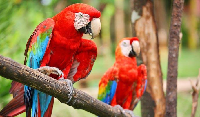 Explore wildlife in Belize