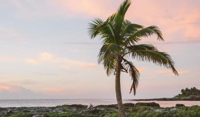 Palm tree, Caribbean