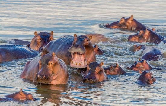 Stay along the Zambezi river