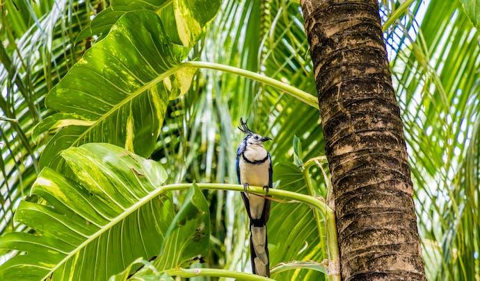 Luxury Hotels in Nicaragua