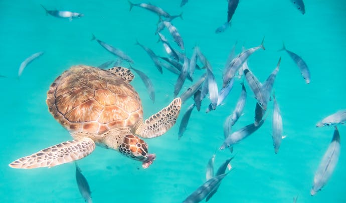 Private ocean tours in Barbados