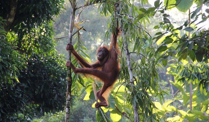 Stay in a jungle lodge in Borneo