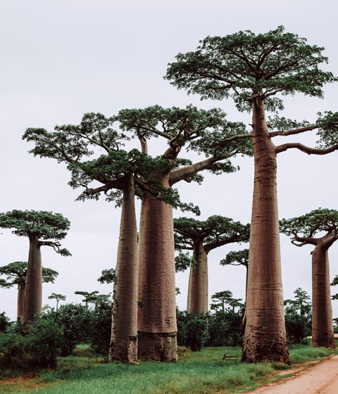 Luxury honeymoons in Madagascar