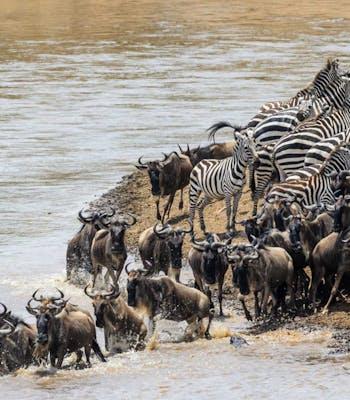 Great Migration in Tanzania
