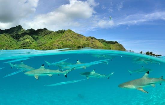 Luxury Holidays in French Polynesia