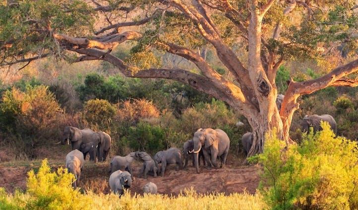 Luxury Lodges in Kruger