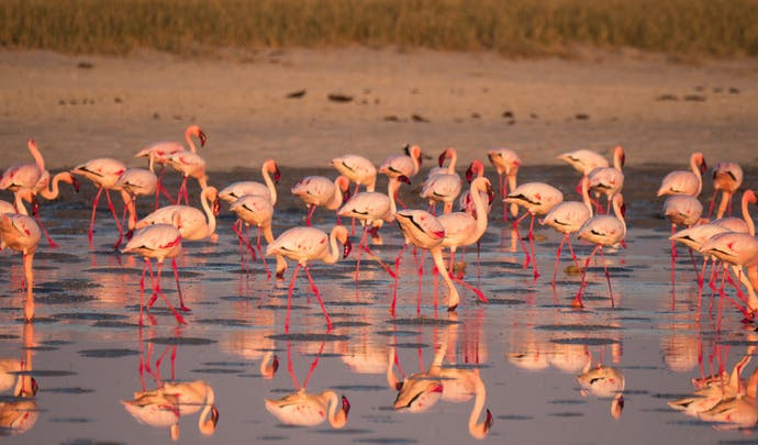Flamingos on Lake Makgadi, Botswana