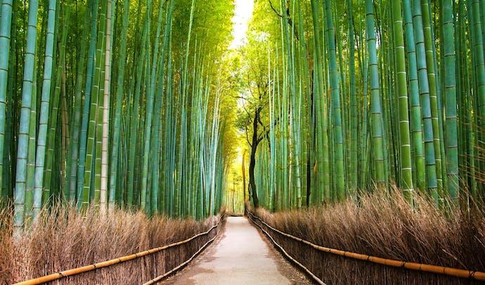 Bamboo Forest Arashiyama, Kyoto