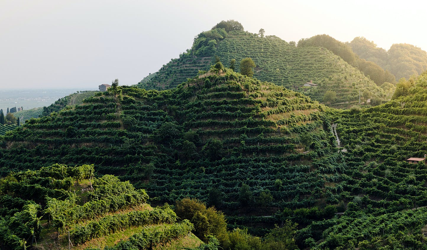Prosecco | Luxury Holidays in Northern Italy