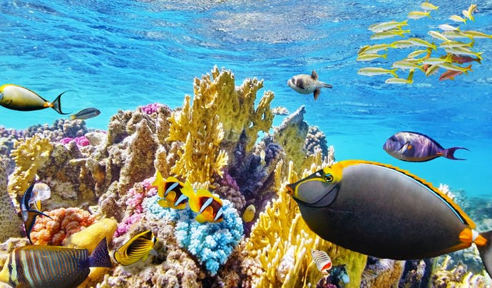 Tropical fish in the Great Barrier Reef