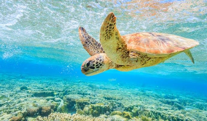 Holidays in British Virgin Islands
