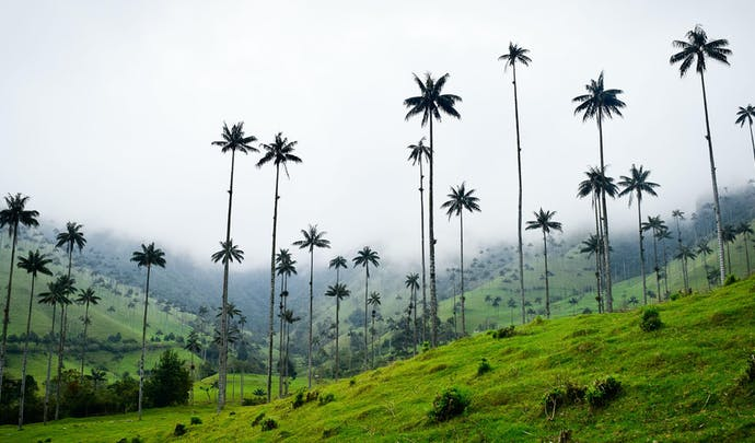 Luxury holidays to Colombia