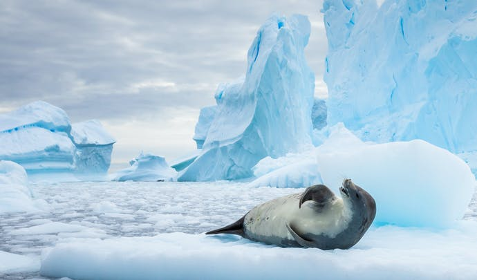 Seal on ice in Antarctica