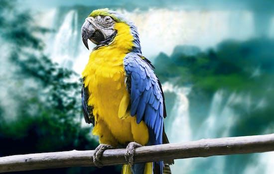 Macaw in Brazil