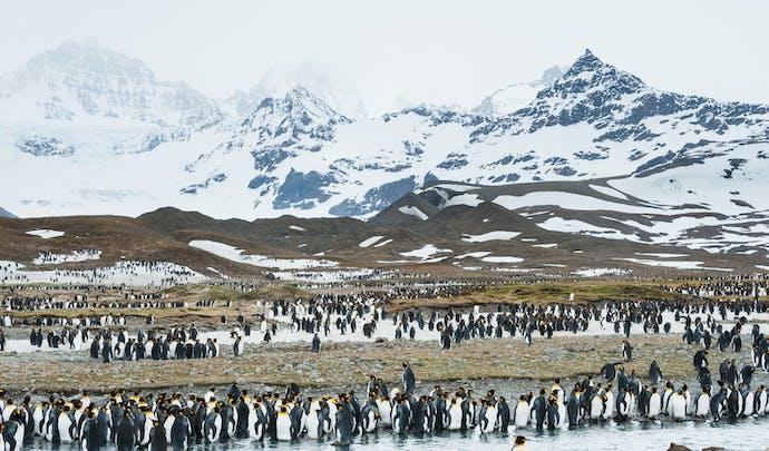 South Georgia Island, Antarctica