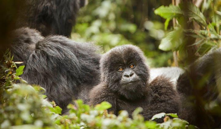 One&Only Gorilla's Nest, Volcanoes National Park, Rwanda