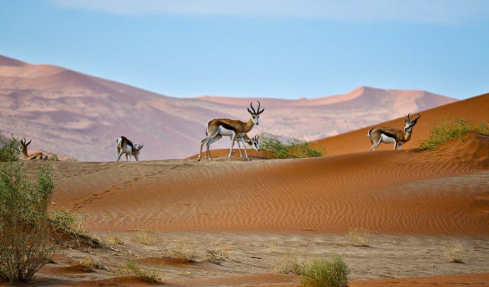 Where to go on vacation in July: Namibia