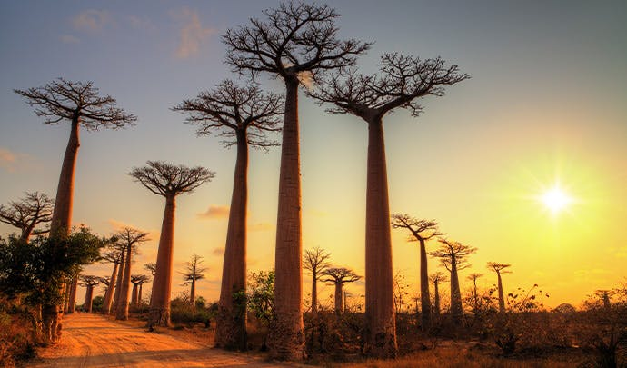 Where to go on holiday in June: Madagascar