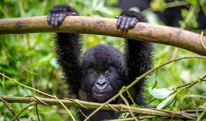 Where to go on holiday: Rwanda