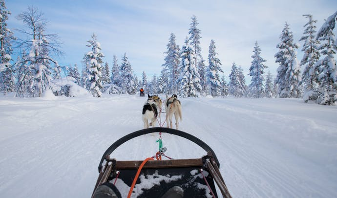 Dogsledding in Swedish Lapland