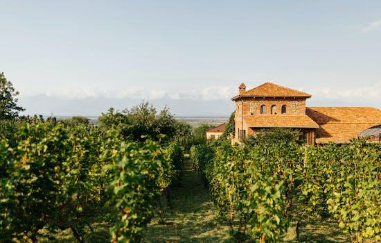 Chateau Svanidze Vineyards